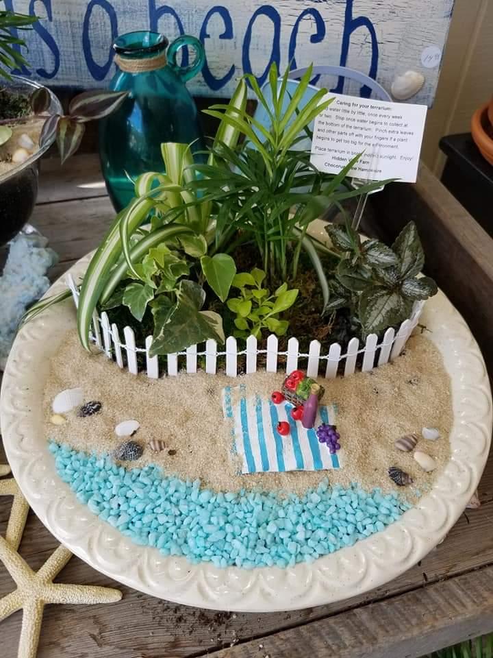 Plants and Terrariums 3