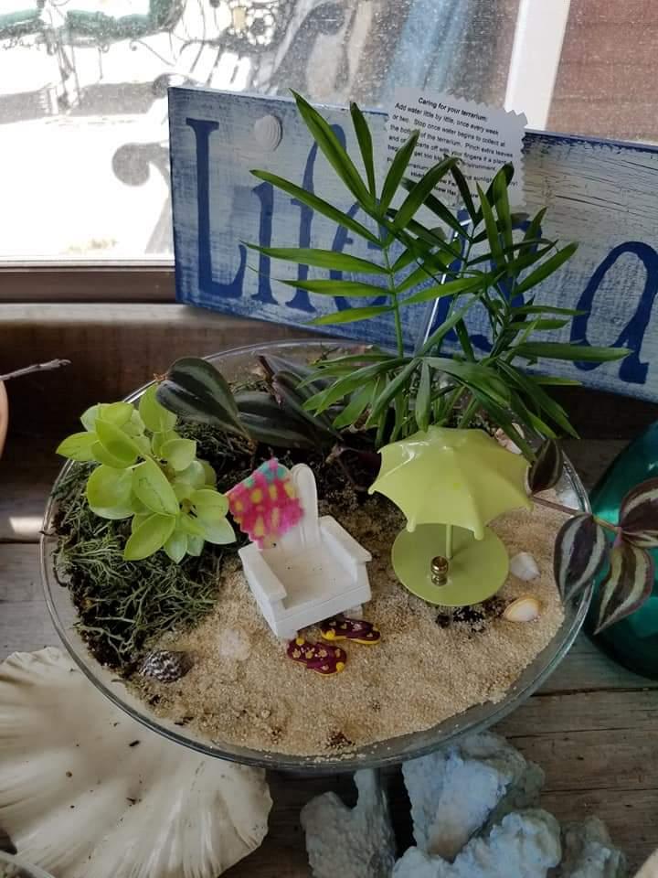 Plants and Terrariums 9