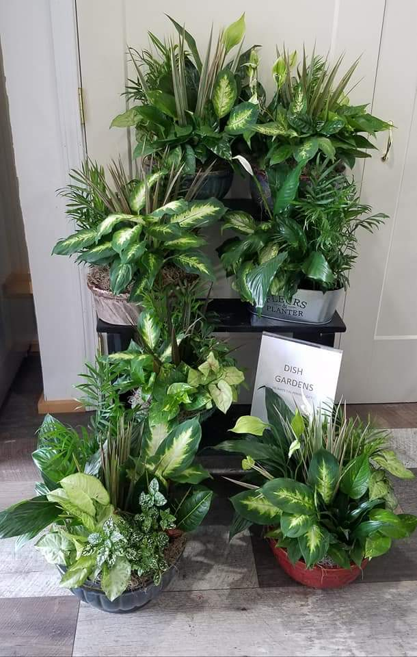 Plants and Terrariums 15