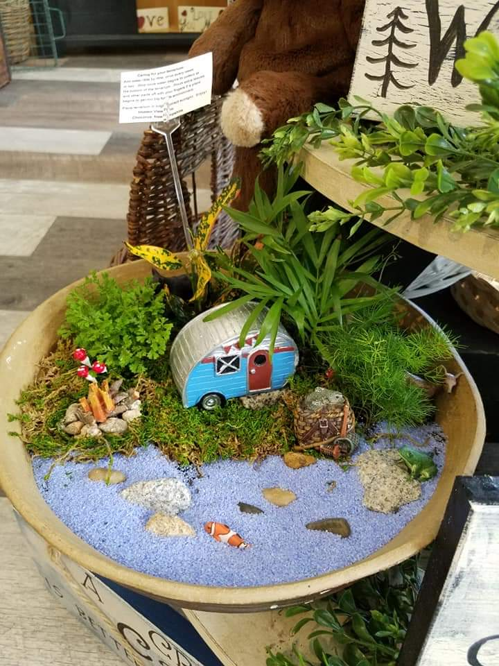 Plants and Terrariums 14