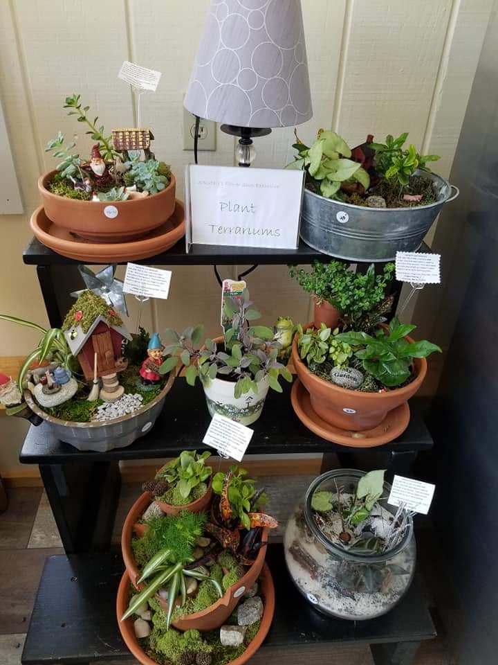 Plants and Terrariums 11