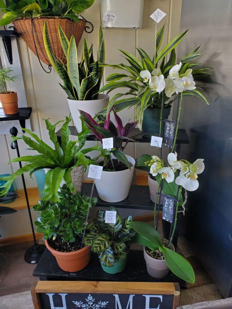 Plants and Terrariums 6