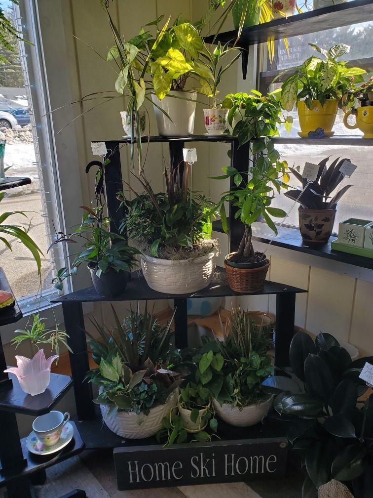 Plants and Terrariums 16