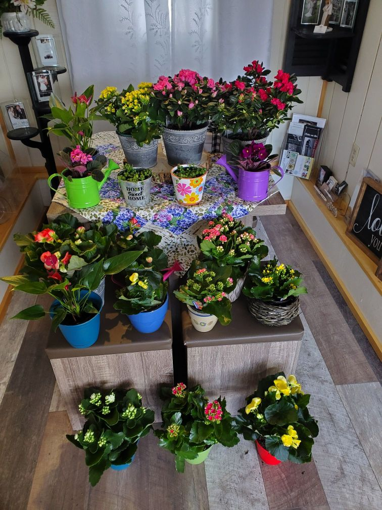 Plants and Terrariums 1